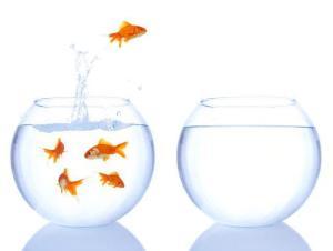 Fish jumping from bowl