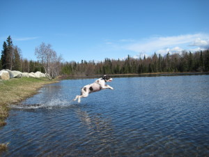 Remi at one of the lakes in Captain Cook State Recreation area...he doesn't really like to swim that much ;)