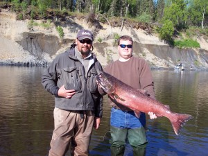 A beautiful king salmon one of my clients caught using a Vibrax spinner on the Deshka River.