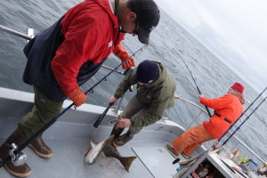 Our friend Janus whacking the halibut.